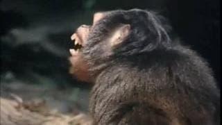 The real life Tarzan