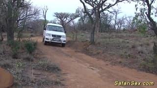 A safari turned into a sex scene in this clip